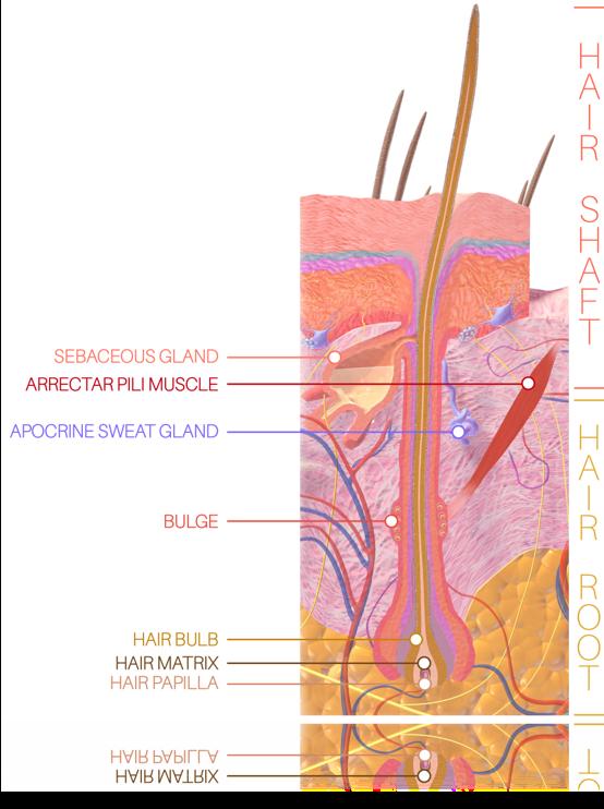 serum za rast trepalnic